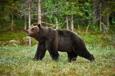 Papiers peints Homme ours brun