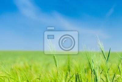 Horizons verts grands ciels d'été