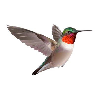Papiers peints Hummingbird - Colubris Archilocus. Main vecteur illustration tirée sur fond blanc d'un vol colibri Rubis-troathed avec coloré plumage brillant.