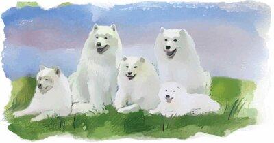 Papiers peints Husky Dog