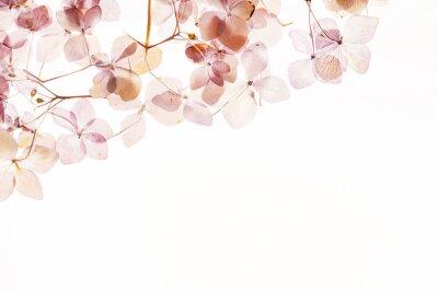 Papiers peints Hydrangea sèche