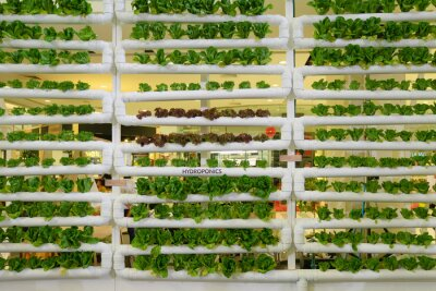 Papiers peints Hydroponics vertical farm in building with high technology farming. Agricultural Greenhouse with hydroponic shelving system.