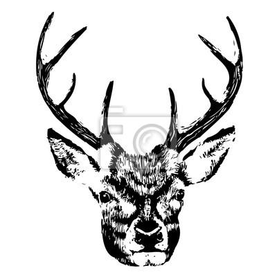 Illustration, cerf, tête, grunge, silhouette, isolé, blanc