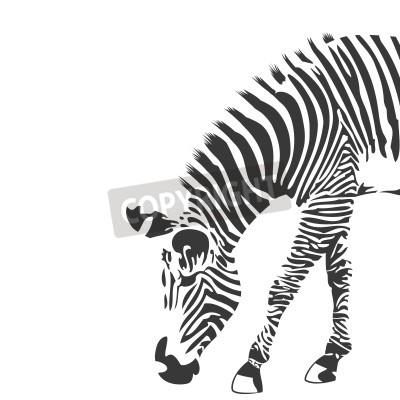 Papiers peints Illustration de zèbre en noir et blanc
