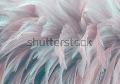 Papiers peints Image nature art of wings bird,Soft pastel detail of design,chicken feather texture,white fluffy twirled on transparent background wallpaper Abstract. Coral Pink color trends and  vintage.