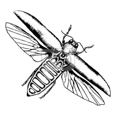 Insecte Volant Insecte Aux Ailes Scarabee Vintage Vieilli