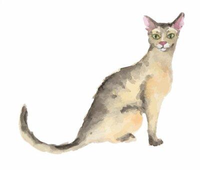 Isolé, aquarelle, chat, séance, blanc, fond Abyssinien.