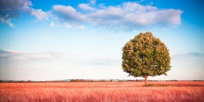 Papiers peints Isolé, arbre, toscane, wheatfield - (Tuscany - Italy) - tonique, image, copie, espace