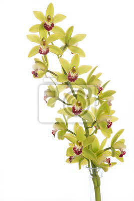 Isolé orchidée qui fleurit