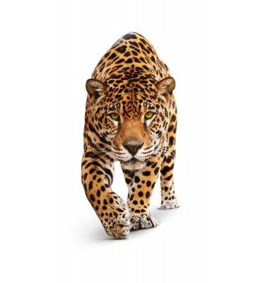 Papiers peints Jaguar - Vue de face de l'animal, isolé sur blanc, ombre