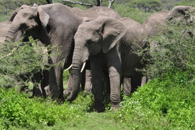 Papiers peints Jeune, africaine, éléphant, troupeau