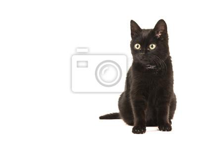 Jeune chat noir assis à la recherche de suite à gauche isolé sur fond blanc