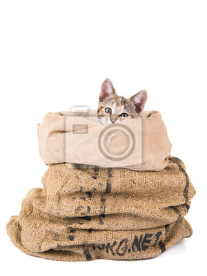 Jeune chat tigré dans un sac isolé au fond blanc