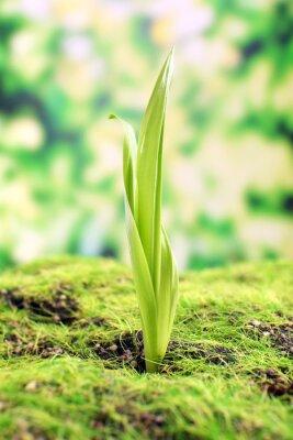 Papiers peints Jeune pousse au printemps, gros plan