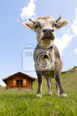 Jeune vache dans le pâturage