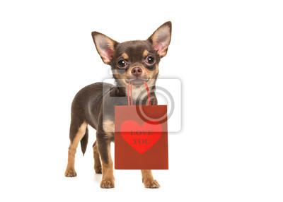 Joli, brun, chihuahua, chien, debout, et, devant, les, appareil photo, tenue, cadeau, sac, dans, sien, bouche, à, les, texte, vous aimer, isolé, sur, a, blanc, fond