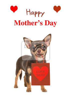 """Joli brun chihuahua chien debout et faire face à les appareil photo tenue a cadeau sac à """"love maman"""" sur elle et texte heureux mère jour isolé sur a blanc fond"""