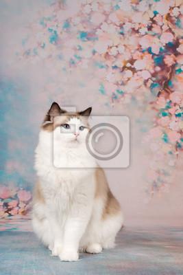Papiers peints Joli chat ragdoll à un fond romantique avec des fleurs