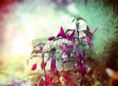 Papiers peints Joli, Fuchsia, fleurs, Été, jardin, fond, fin, haut ...