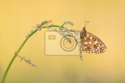 Jolie petite perle bordée papillon fritillaire repos sur l'herbe avec fond d'or
