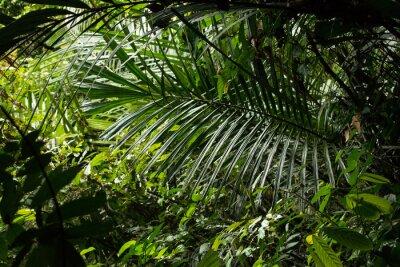 Papiers peints jungle