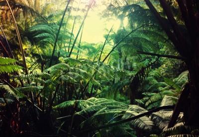 Papiers peints Jungle à Hawaï