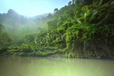 Papiers peints Jungle au Vietnam
