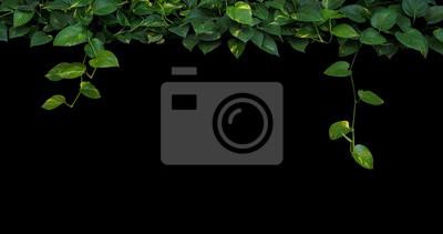 Jungle Plante Feuilles De Fond En Forme De Coeur Vert Jaune Papier
