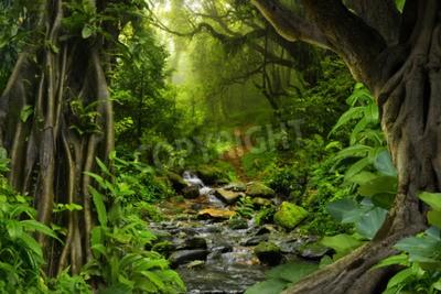 Papiers peints Jungle tropicale avec rivière