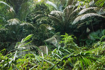 Papiers peints jungles tropicales du sud est asiatique