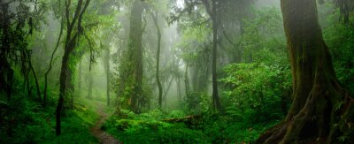 Papiers peints Jungles tropicales profondes de l'Asie du sud-est en août