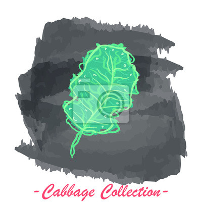 Kale leaf vector isolated cabbage on a grunge background