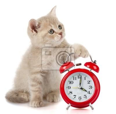 Kitten Temps