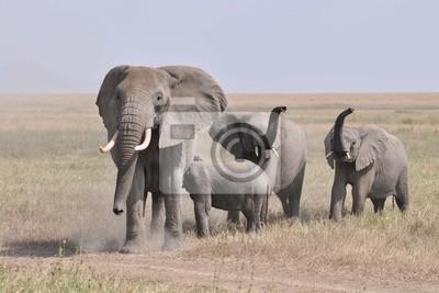 Kudde geirriteerde boze olifanten komt op de caméra aflopen