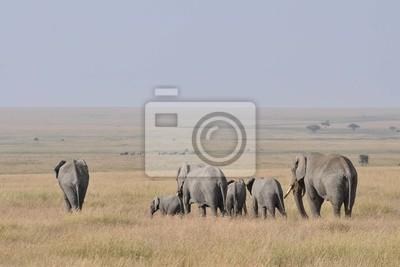 Kudde olifanten mourir je ziet weglopen de grote Vlakte op.