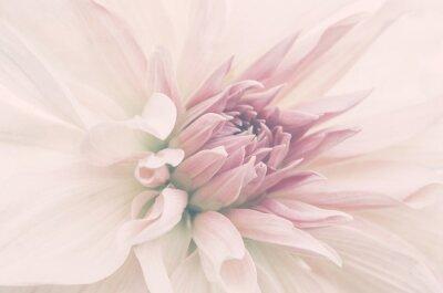Papiers peints Kwiat ze ślubnego bukietu, delikatne płatki, ujęcie macro.