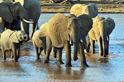 Papiers peints l'éléphant