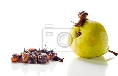 L'escargot sur une poire s'adresse à la foule.