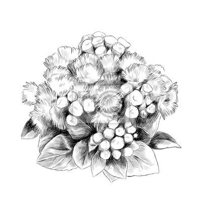 Papiers Peints La Fleur Bush Bouquet Ageratum Croquis Vecteur Graphique Dessin