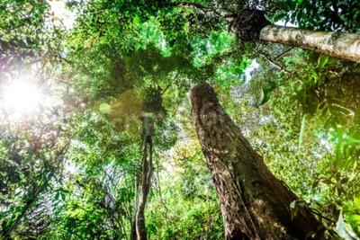 Papiers peints La forêt amazonienne, le Brésil, l'Amérique du Sud