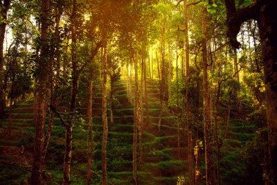 Papiers peints La jungle sauvage dans les hauts plateaux.