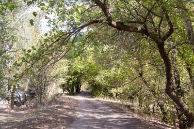 Papiers peints La route dans les bois