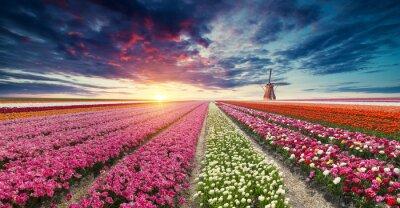 Papiers peints La route menant aux moulins à vent néerlandais depuis le canal à Rotterdam. Hollande. Pays-Bas