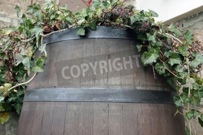 Papiers peints La vigne se développe à partir du baril de bois sombre