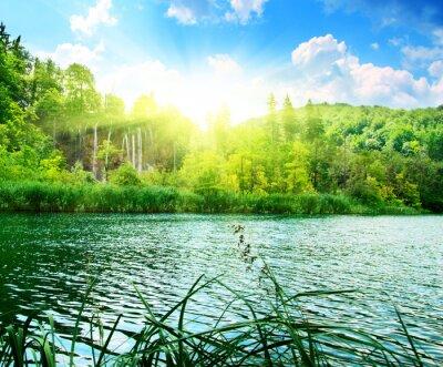 Papiers peints lac dans la forêt profonde