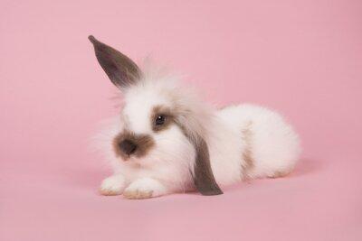 Lapin mignon couché sur un fond rose avec une oreille en haut et une oreille en bas