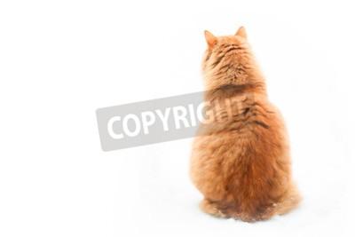 Large orange tabby cat sitting on white background