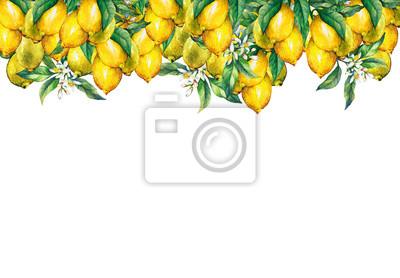 Le cadre des branches de citrons frais d'agrumes avec des feuilles vertes et des fleurs. Peinture aquarelle dessinés à la main sur fond blanc.