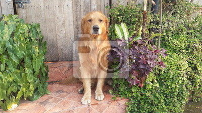 Le chien est la garde devant la porte