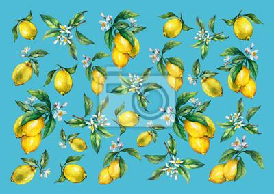 Le fond des branches de citrons frais d'agrumes avec des feuilles vertes et des fleurs. Peinture tirée par la main d'aquarelle sur le fond bleu.